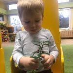 Chłopiec trzyma w ręce gałązkę ostrokrzewu