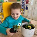 Chłopiec siedzący przy stoliku, trzymający w ręce sadzonkę kwiatka. Przed chłopcem stoi doniczka z bratkami.