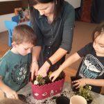 Trzech chłopców i Pani sadzacy kwiatki do doniczki.