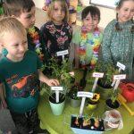 Sześcioro dzieci pozujących do zdjęcia w sali przedszkolnej. Przed dziećmi stoi zielony stolik z sadzonkami roślin i ziół.