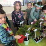 Dzieci sadzące kwiatki i inne rośliny do doniczek. Chłopiec i dziewczynka trzymaja w rękach konewki i podlewają posadzone rośliny. Dziewczynki mają na głowach kolorowe wianki, chłopcy naszyjniki z kwiatów.