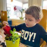 Chłopiec siedzący przy stoliku, trzymający czerwoną łopatkę i sypiacy do zielonej doniczki z rośliną ziemię.