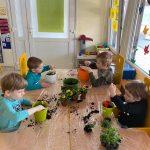 Czterech chłopców siedzących przy stolikach i sadzących do doniczek kwiatki.