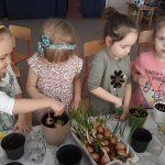 Cztery dziewczynki siejace w doniczkach z ziemią nasiona roślin oraz cebulę