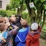 Grupa dzieci przy drzewnie trzyma w ręce rolkę po papierze i przykłada ją do oka. Na drzewie powiesznowy jest obrazek muchy.