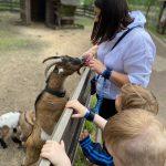 Pani karmi kozę za ogrodzeniem. Widać dwie głowy chłopców.