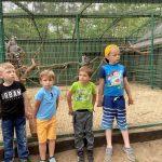 4 chłopców stoi przed klatką z lemurami.