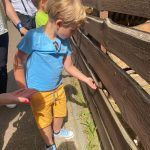 Chłopiec karmi kozę za ogrodzeniem.