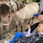 Chłopiec na wózku siedzi przy koniu.