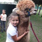 Dziewczynka przytulona do alpaki.