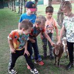 6 chłopców głaszcze kozę.