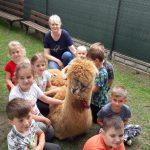 Grupa dzieci i nauczycielka siedzą dookoła lamy