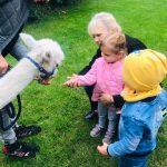 Pani, 2 dzieci, alpaka. Dziewczynka ma wyciągniętą rękę i otwartą dłoń z marchewką.
