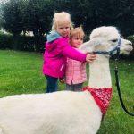 2 dziewczynki głaszczą alpakę.