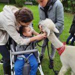 Chłopiec siedzi na wózku. Obok stoi Pani, która pomaga mu pogłaskać alpakę.