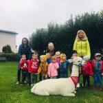 Grupa dzieci, 3 Panie i alpaka.