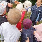 Pięcioro dzieci głaszczących alpakę w ogrodzie przedszkolnym.