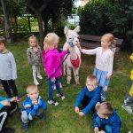 Grupa dzieci będąca w ogrodzie przedszkolnym z alpaką.