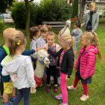 Dziewięcioro dzieci stojących w ogrodzie przedszkolnym. Na pierwszym planie, pomiędzy dziećmi leży alpaka. W tle stoi chłopiec i starszy chłopak trzymający alpakę