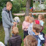 Dziewięcioro dzieci będących w ogrodzie przedszkolny. Przed dziećmi stoi chłopak i alpaka.