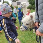 Grupa dzieci i dwie alpaki będący w ogrodzie przedszkolnym. Na pierwszym planie chłopiec wyciągający rękę do alpaki.