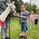 Chłopiec karmiący alpakę marchewką. Za chłopcem stoi troje dzieci. Alpakę trzyma chłopak.