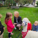 Alpaka, Pani i troje dzieci będących w ogrodzie przedszkolnym.