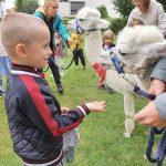 Na pierwszyma planie chłopiec karmiący alpakę marchewką, W tle alpaka, dwie Panie i troje dzieci .