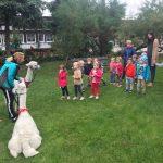 Grupa dzieci wraz z dwiema Paniami stojąca w ogrodzie przedszkolnym. Przed dziećmi stoją dwie alpaki z Panią.