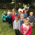Grupa dzieci i Pani pozujący do zdjęcia w ogrodzie prezdszkolnym. Za dziećmi stoją dwie alpaki. Po prawej stronie, na ławce leży pudełko z marchewkami.