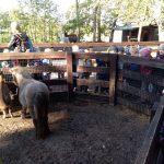 Zagroda z kucykiem i kozami, otoczona obserwującymi zwierzęta dziećmi.