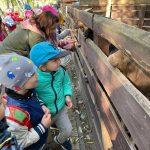 Dzieci z nauczycielem stoją przy zagrodzie i karmią znajdujące się tam kozy.